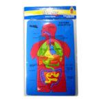 rompecabeza  Foamy Educativo Sistema Digestivo  Merletto unisex Multicolor +3 Años