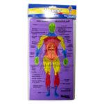 rompecabeza  Fomi Educativo  Sistema Muscular  Merletto unisex Multicolor +3 Años